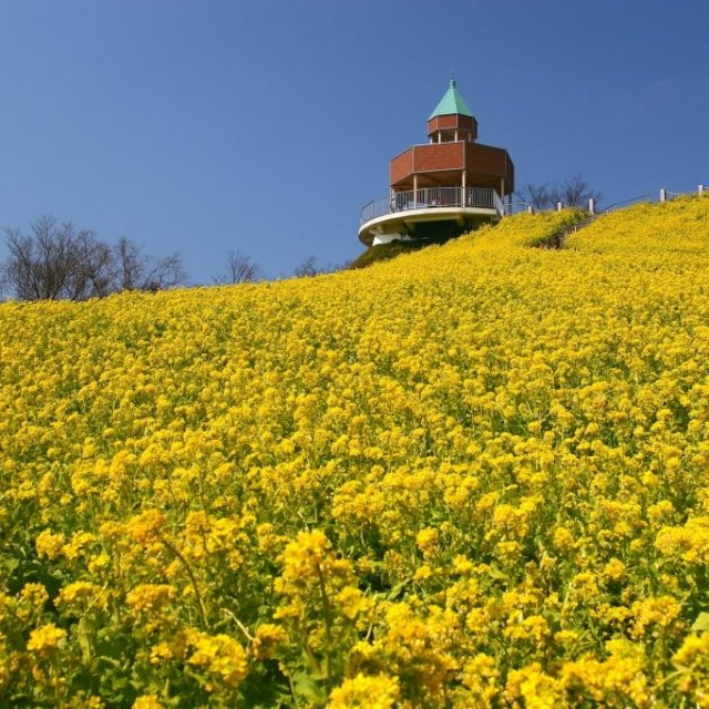 Take a scenic drive from the castle town of Matsuyama to eastern Ehime
