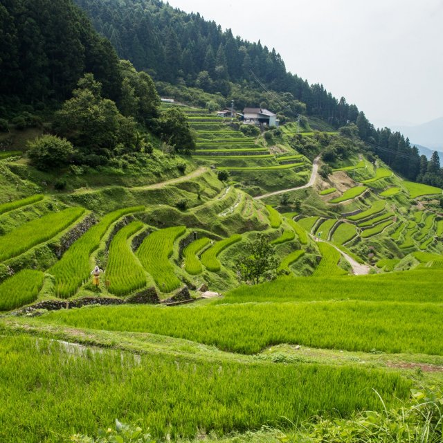 Izumidani Terraced Rice Fields